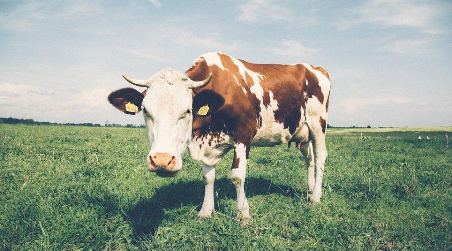 Por qué ya no como animales ni derivados de ellos