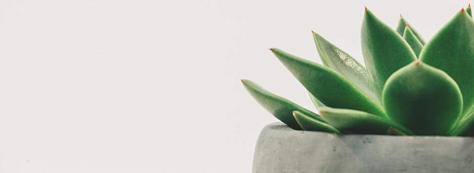 minimalismo y bienestar 1