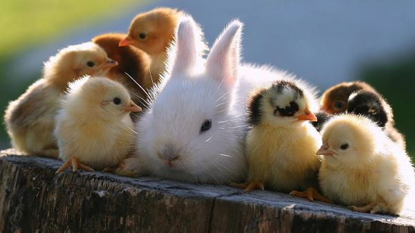 No uso de animales en la cosmética vegana